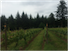 Post image for Everything you need to know about Oregon wine…